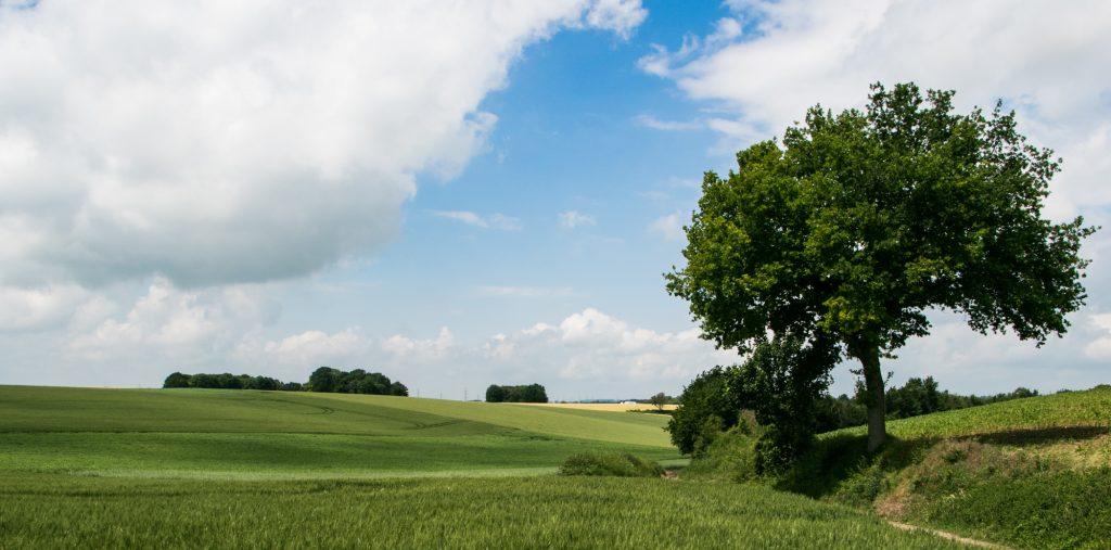 Natuur en landschap